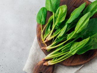 3 recetas fáciles con espinacas que sorprenden 7
