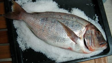 Photo of Receta de pargo a la sal