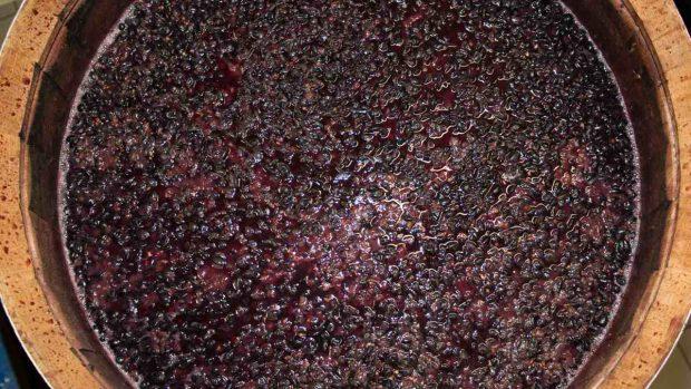 Ropa de uva