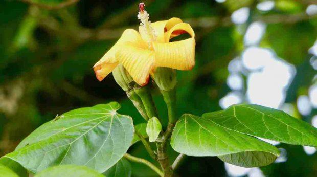 Mermelada de flor de jamaica