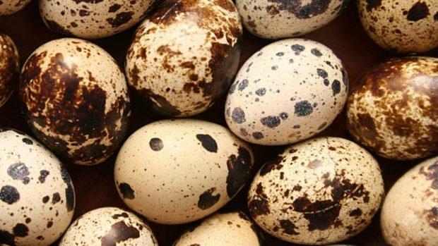Huevos de codorniz a la plancha con jamón serrano: receta excepcional 2