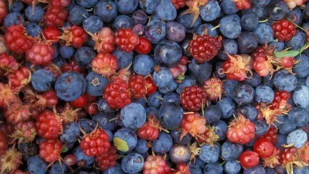 Sorbete de frutas del bosque