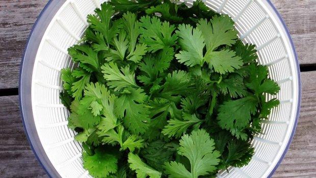 Aderezo de cilantro para tu ensalada
