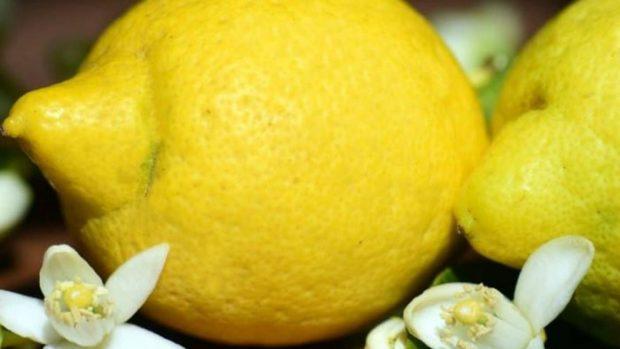 Mousse de naranja y limón: una receta de postre rápida y fácil de hacer
