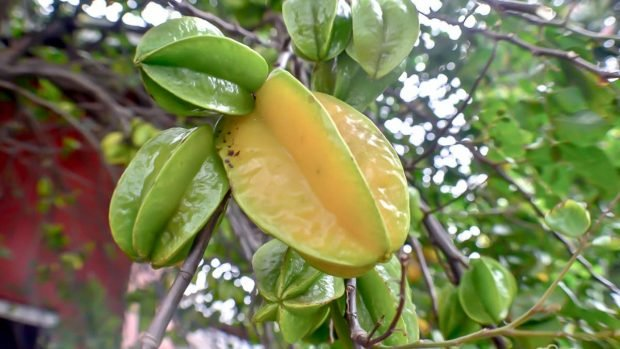 Fruta de carambola